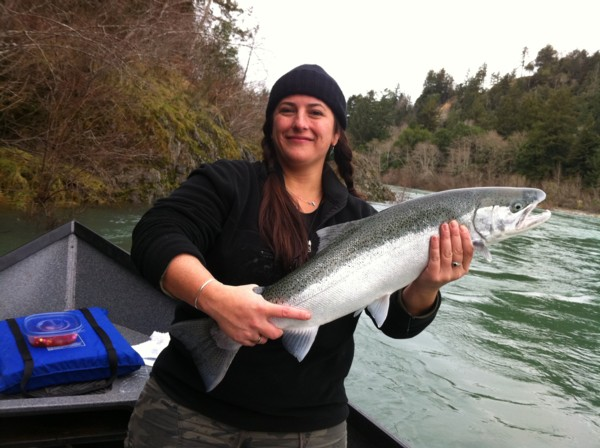 Smith River steelhead caught in late December by Rebecca.