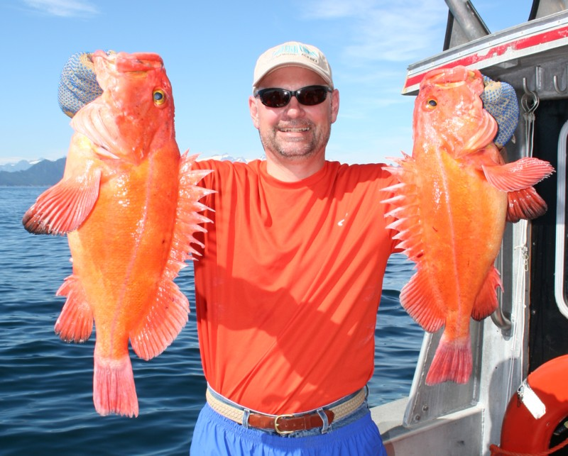 A pair of yelloweye rockfish.
