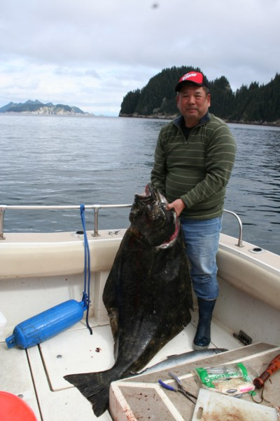 Big halibut caught on salmon rod.