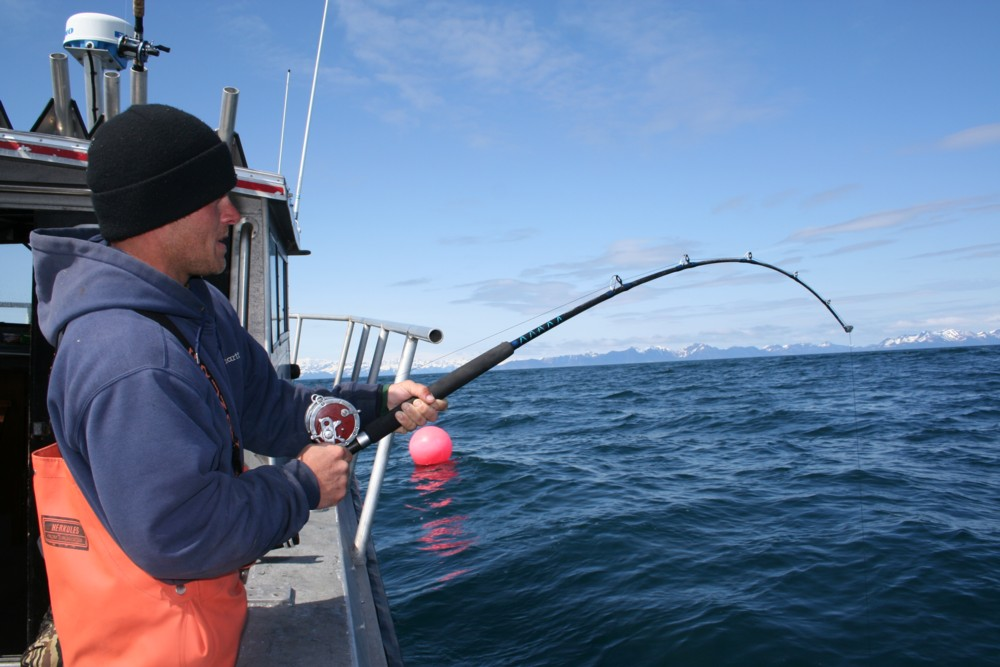 Jason Lewis fights a Seward, Alaska halibut.